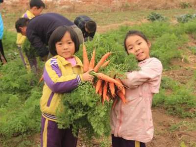 明珠国学学校|拥抱自然,体验农耕,开心拔萝卜尽显童真!